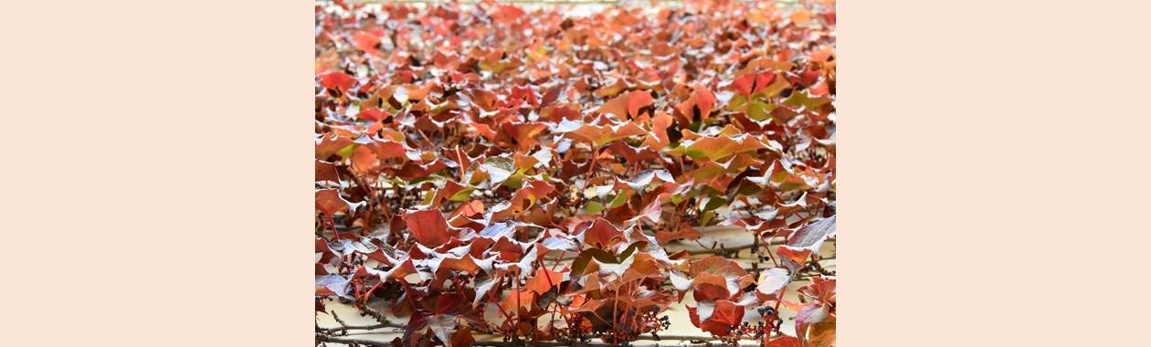 autumn_slide